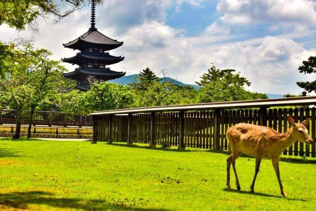 奈良県で働く薬剤師さんのリアルな業種別年収