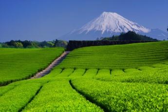 静岡県で働く薬剤師さんのリアルな業種別年収